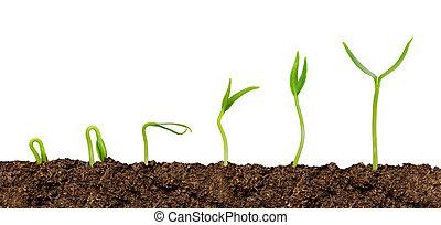 plantas, crescendo, de, soil-plant, progresso, isolado