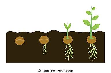 plantas, crescendo, em, solo