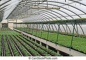 plantas, crescendo, interior, estufa