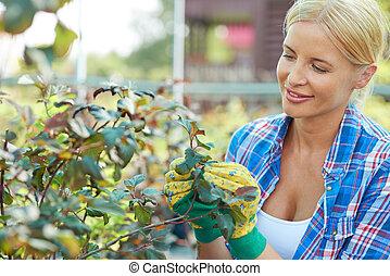 plantas, cuidando