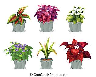 plantas, diferente, seis