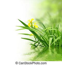 plantas, e, água