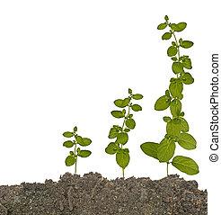 plantas, em, solo