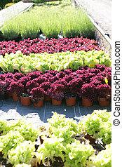 plantas, em, um, berçário