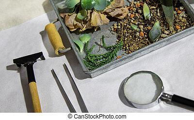 plantas, en, caja, con, tools.