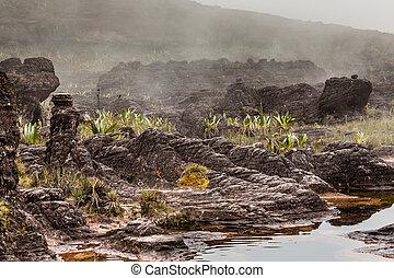 plantas, endemic, raro, muy, -, meseta, venezuela, roraima