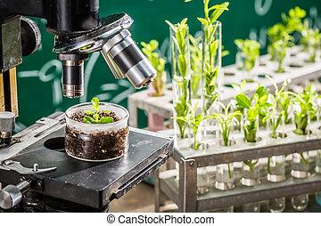 plantas, escola, estudo, verde, laboratório, crescendo, durante