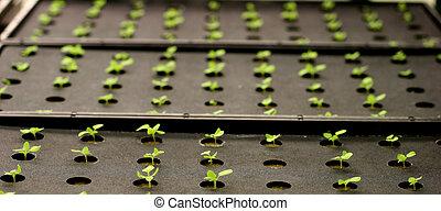 plantas, estufa