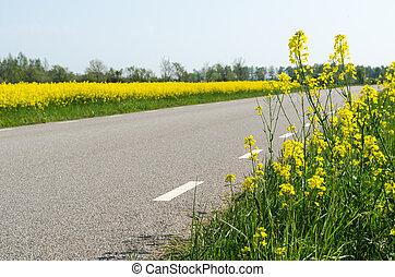 plantas, flor, país, campo, semente, violação, estrada