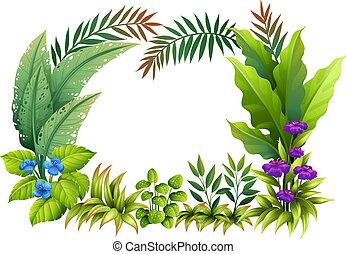 plantas, flores
