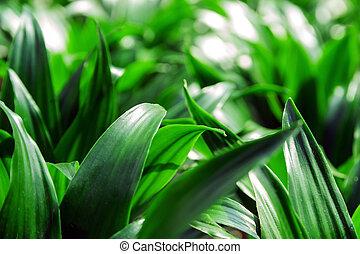 plantas, folha, natureza, folhas, -, tropicais, verde, selva