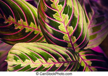 plantas, fondo., tropical