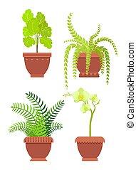 plantas, habitación, vector, flores potted, illustrtaion