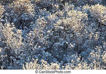 plantas, inverno, gelado