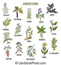 plantas, jogo, mão, herbs., anodyne, desenhado, medicinal