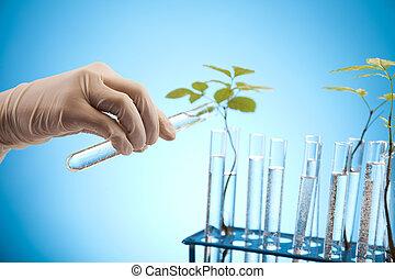 plantas, laboratório