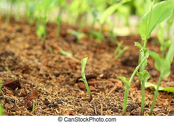 plantas, ligado, solo, com, natural