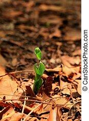 plantas, ligado, solo