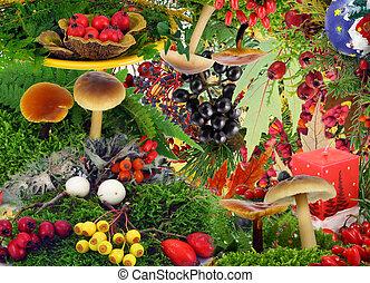 plantas, madera, bayas, autmn