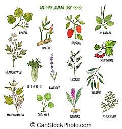 plantas, mano, dibujado, conjunto, anti-inflammatory, medicinal, herbs.