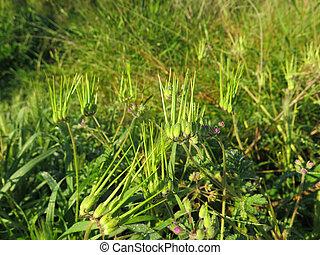 plantas, Novo, tiros, verde