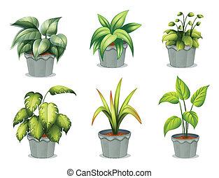 plantas, olla, seis, frondoso