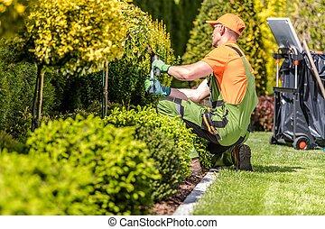 plantas, orla, jardín, trabajador