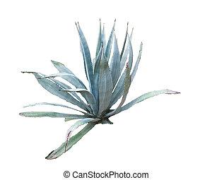 plantas, ornamental, blanco, aislado, plano de fondo