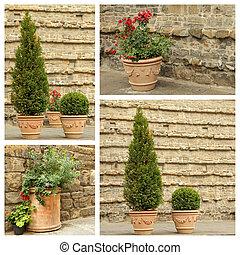 plantas, ornamental, -, panelas terracota, colagem, vindima, imagens