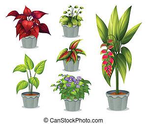 plantas, ornamental, seis