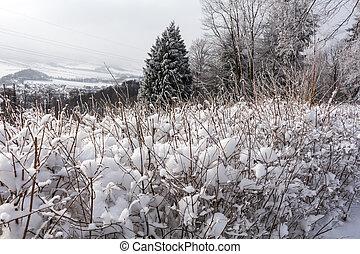 plantas, paisagem., natural, inverno, nevado, congelado, scene., campo, pôr do sol, rural, pôr do sol, paisagem