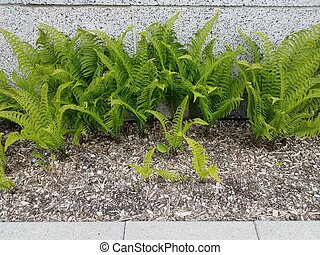 plantas, parede, fern, verde, solo