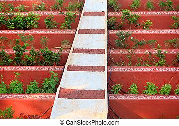 plantas, paredes, arreglo, rojo, entre