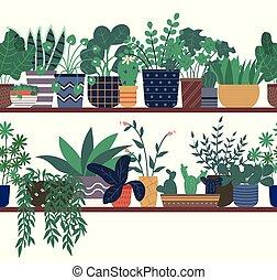 plantas, posición, de madera, estante, invernadero, casa