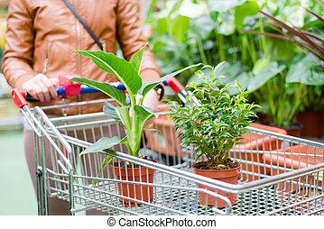 plantas, posición, olla, dos, supermercado, carrito, solding