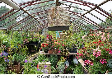 plantas, potted, lleno, colorido, invernadero
