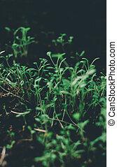 plantas, primavera, semente