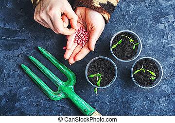 plantas, primavera, sementes, mãos