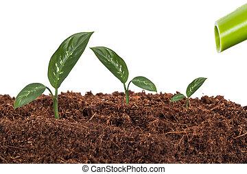 plantas, solo, aguando, waterer