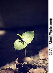 plantas, solo