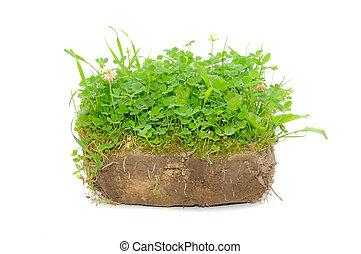 plantas, solo, isolado, experiência verde, branca
