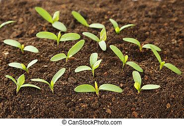 plantas, solo, verde, jovem