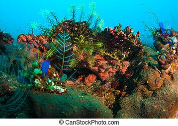 plantas, submarinas, peixe, bali, coral