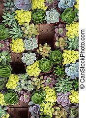 plantas, suculento, miniatura