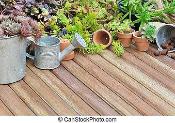 plantas, suculento, terraza