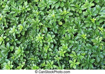 plantas, verde, exuberante, plano de fondo