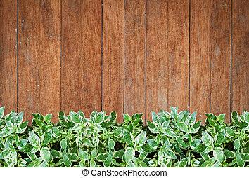 plantas, viejo, pared, de madera, fondo verde