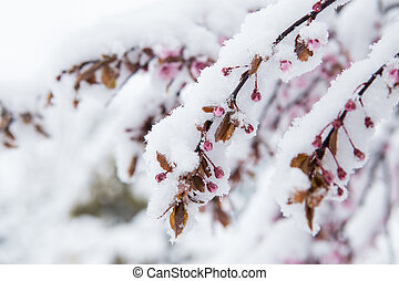 plantas, winter., foto, nevado