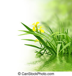 plantas, y, agua