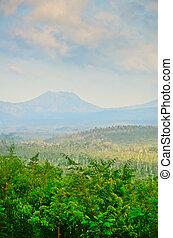 plantatie, java, koffie, indonesie, oosten